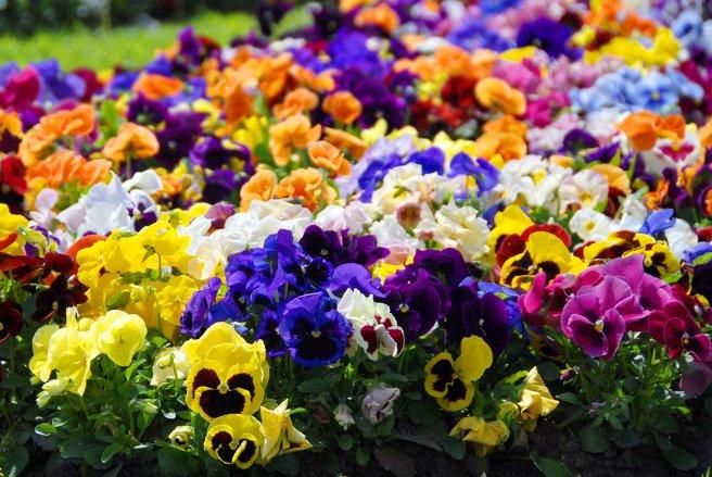 Pour avoir un beau jardin en hiver, il faut l'anticiper et le préparer.