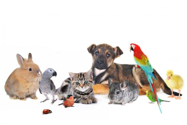 Les Français sont les plus grands détenteurs d'animaux de compagnie d'Europe, avec près de 20 millions de chiens et de chats. © Shutterstock