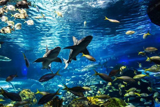 Il ne subsiste que 13% de vie considérée comme sauvage dans les océans. © Shutterstock
