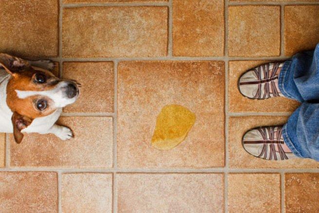 Apprendre à son chien la propreté – Source : http://les-mascottes-pn.eklablog.com