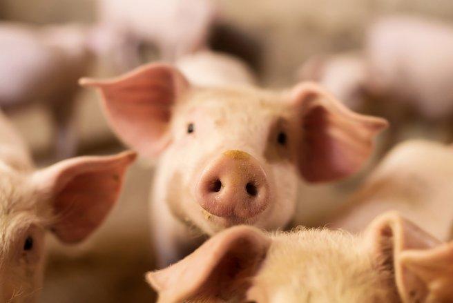 L'association a porté plainte devant le tribunal de grande instance de Quimper pour maltraitance animale. © Shutterstock
