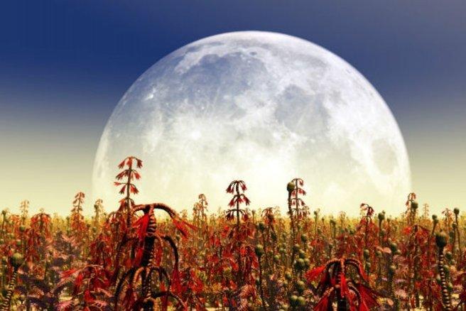 Jardiner gr ce la lune - Quels outils pour jardiner ...
