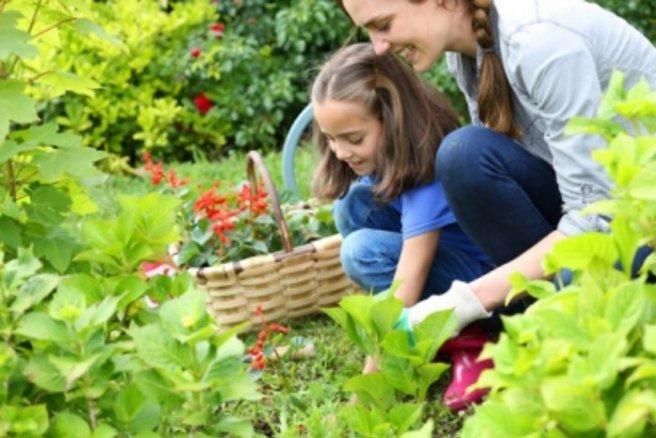 que faire au jardin en août ?