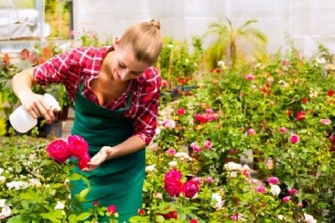 Jardiner bio comment fabriquer son insecticide naturel for Desherbant naturel grande surface