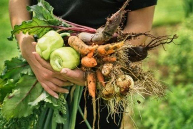 Jardin que pouvez vous planter dans un potager en carr s - Que planter dans un carre potager ...