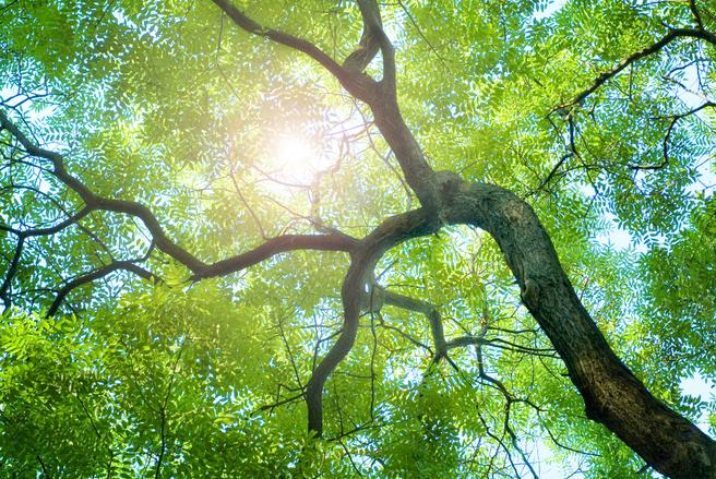 Vous retirerez des bénéfices de votre arbre lorsqu'il sera coupé. © Shutterstock