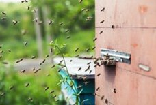 Comment débarrasser sa maison des nuisibles ?